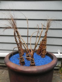 "Leatherleaf sedge (carex buchananu). Pot is about 30"" wide x 30"" tall, grass is about 24"" tall."
